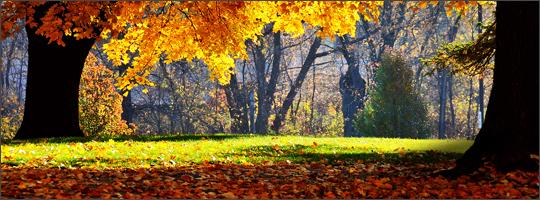 Leaf Removal: Should I Bag or Mulch?