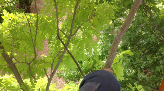 View from up in a tree.